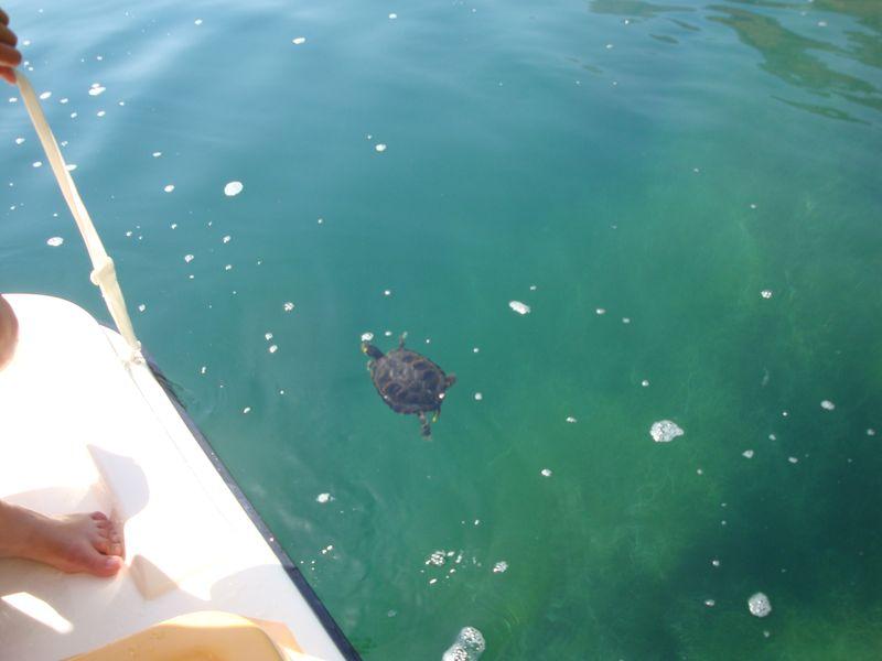 005. Set free turtle - Lake Kournas (Η λίμνη Κουρνά)