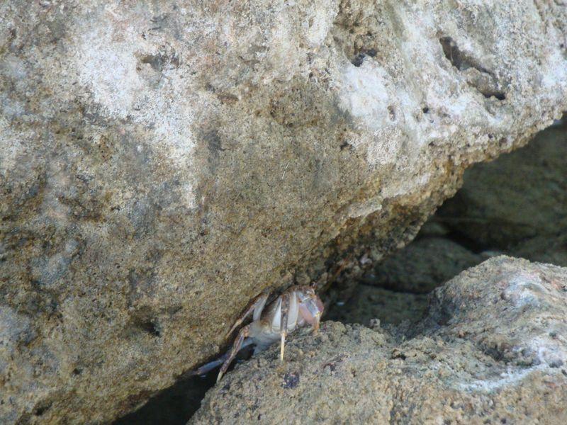 016. Hiding crab - Lake Kournas (Η λίμνη Κουρνά)