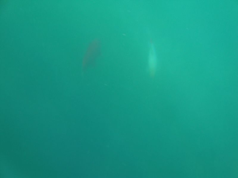 017. Shadows of big fish - We caught sight of fish shadows through the water mass. Lake Kournas (Η λίμνη Κουρνά)