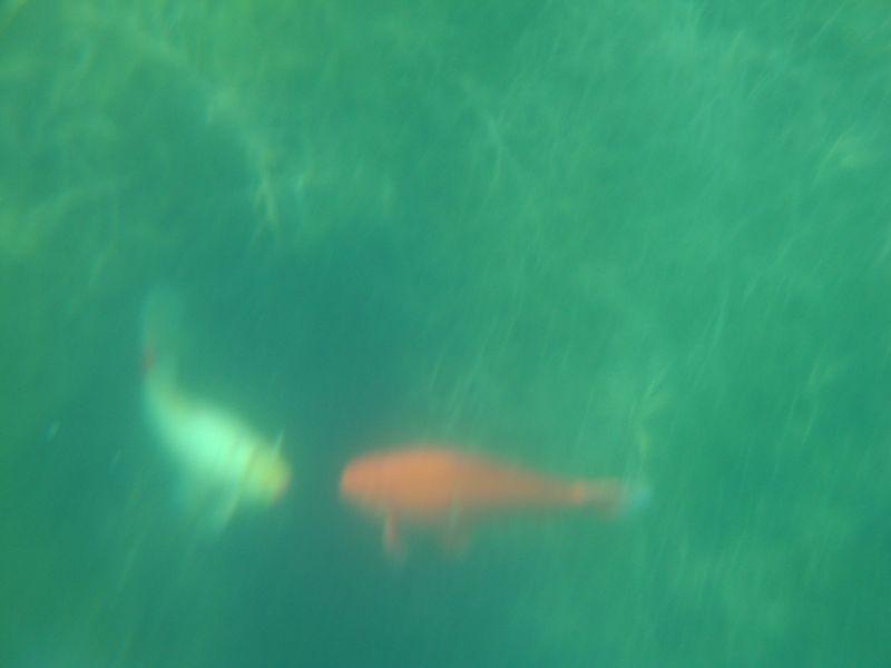 019. Gruesome-twosome - Fish photo shoot. Lake Kournas (Η λίμνη Κουρνά)