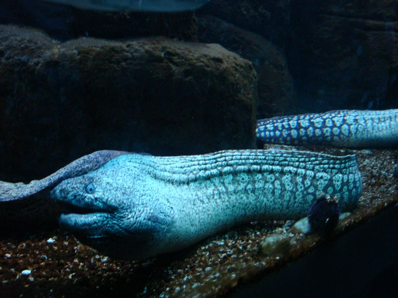 075. Most сharming and attractive - Moray. Cretaquarium (Θαλασσόκοσμος)