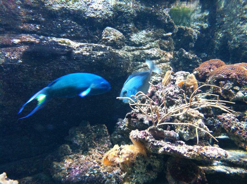 098. More fish - Cretaquarium (Θαλασσόκοσμος)