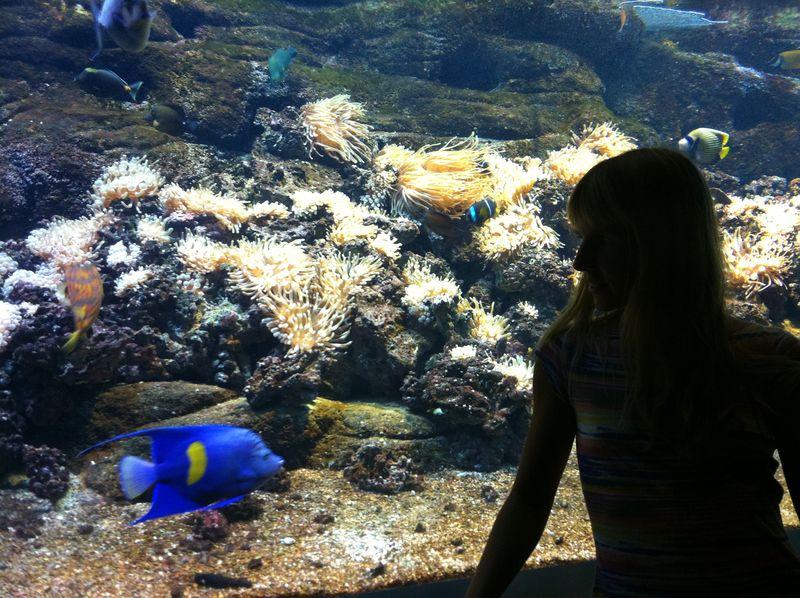 106. My angel - Yellowbar angelfish. Cretaquarium (Θαλασσόκοσμος)