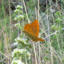 064. Something is written on its wings -