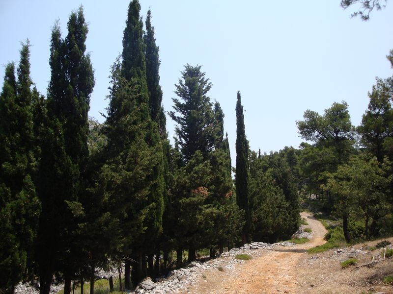 066. Well-preserved road - surrounded by cypress trees on Dhelfi mountain (Δέλφη)