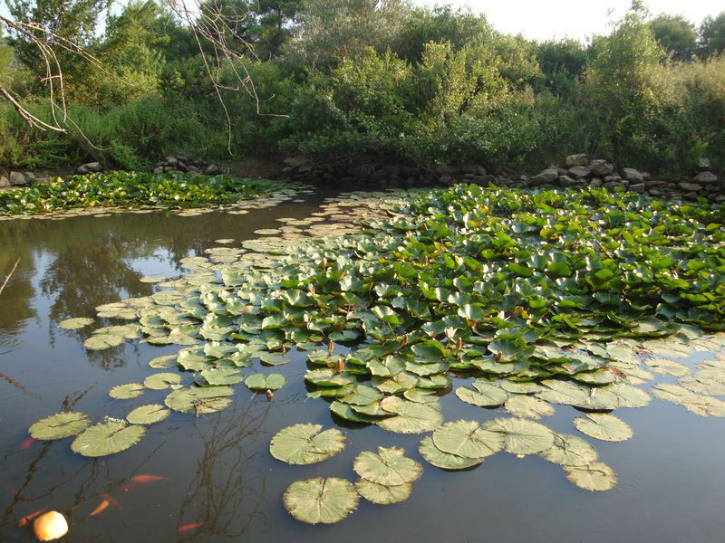 076. Fish in the pond -